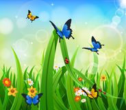 Background Green Grass with butterfly. And Sunburst Stock Images