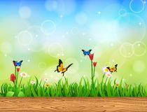 Background Green Grass with butterfly. And Sunburst Stock Photo