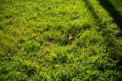 Background of a Green Grass Stock Images