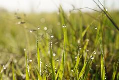 Background of green grass with dew drops at leaves stock photography