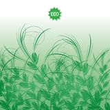 Background with green grass ears of corn Royalty Free Stock Photo