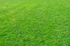 Background of green grass field. Green grass pattern and texture