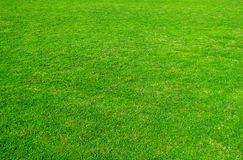 Background of green grass field. Green grass pattern and texture. Green lawn for background stock images