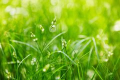 Shoots of a young green grass on a dark blurry background in the park stock photography