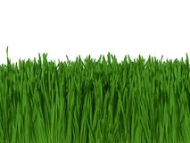 Background of Green Grass Isolated on White  Royalty Free Stock Photo
