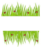 Background  with green grass   and ladybirds. Background  with green  grass  and ladybirds,  vector  illustration Royalty Free Stock Photography