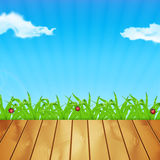 Background with green grass Stock Photos