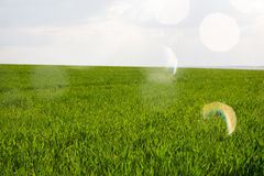 Background of green grass Stock Photos
