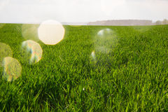 Background of green grass Royalty Free Stock Photos