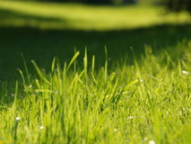 Background of green grass. South Bohemia stock image