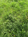 Background of Green Grass Stock Photo