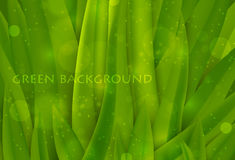 Background of green grass Royalty Free Stock Photo