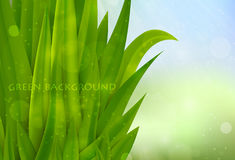 Background of green grass Stock Images