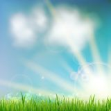 Background With Green Grass. Royalty Free Stock Images