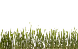 Background with green grass . Background with green grass on a white background Stock Photos