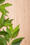 Background with green leaf Royalty Free Stock Photography