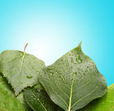 Background with green leaf Royalty Free Stock Image