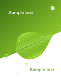 Background with green leaf. Vector illustration, AI file included Royalty Free Stock Photography