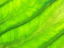 Background of green leaf texture Stock Image