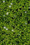 Background of green Leaf Stock Photography