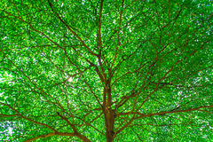 Background of green leave Nature, park tree Stock Photo