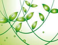 Background with green leaves Royalty Free Stock Images