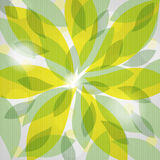 Background from  green leaves Stock Photos