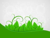 Background with green leaves Stock Image