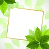 Background with Green leaves. Frame with summer fresh green leaves Stock Image