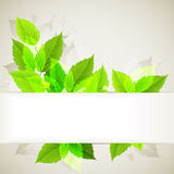 Background with Green leaves. Frame with summer fresh green leaves Royalty Free Stock Photography