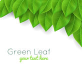 Background with green leaves. Background with green realistic leaves Royalty Free Stock Photography