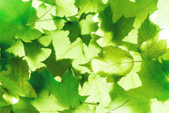 Background of green leaves Stock Photos