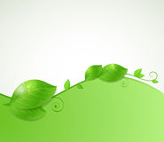 Background with green leaves. Abstract vector background with fresh green leaves Royalty Free Stock Photo