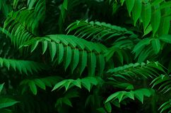 Background of green leaves. stock photography