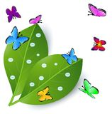Background  with green leaves and butterflies Royalty Free Stock Photo