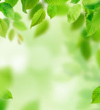 Background of green leaves, close-up. Royalty Free Stock Images