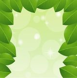 Background with green leaves for a design Stock Photos