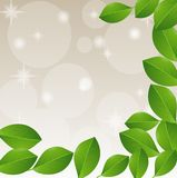 Background with green leaves for a design. And mestome for text, illustration Royalty Free Stock Images