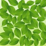 Background with green leaves for a design Royalty Free Stock Photos
