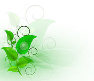 Background with green leaves. Design with place for your content,  illustration Stock Images
