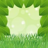 Background with green leaves and grass Stock Photo