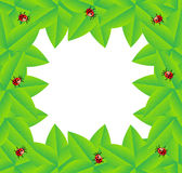 Background  with green leaves and ladybirds. Vector  illustration Stock Photos