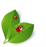 Background  with green leaves and ladybirds. Vector  illustration Royalty Free Stock Photos