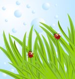 Background  with green leaves and ladybirds. Vector  illustration Stock Photo