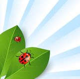 Background  with green leaves and ladybirds. Vector  illustration Stock Image