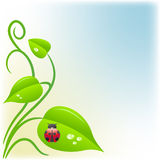 Background with green leaves and a ladybug Stock Image