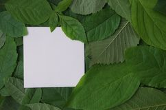 Background of green leaves with a paper Stock Image