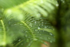 Background of  green leaves with raindrop Stock Images