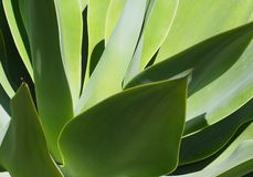 Background Of Green Leaves With Shadows royalty free stock photography