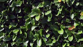 Background of green leaves stock footage